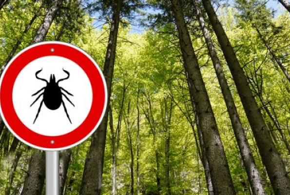 0001_800x400-the-truth-about-lyme-disease-700x350_1587649000-c4b4b725b61b3b7ac3dd76a8077b7ee8.jpg